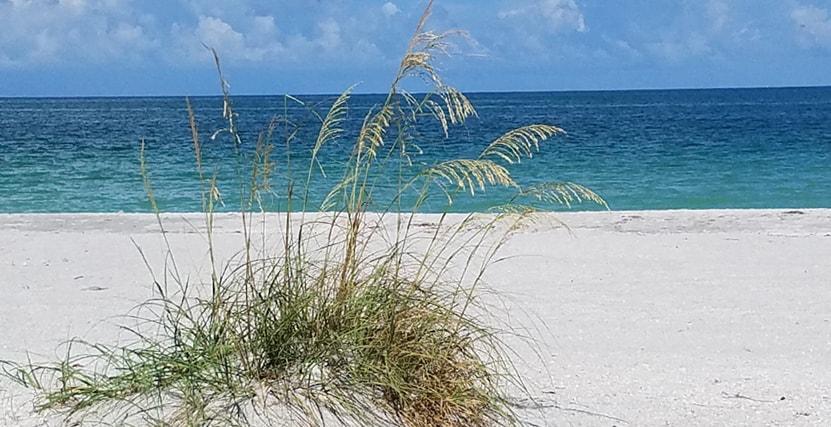 Calming blue water at Sand Key Beach Park
